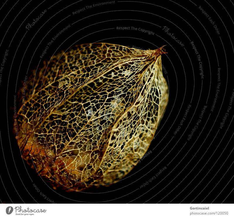 Golden Network I Stil Design Winter Umwelt Natur Pflanze Herbst Blatt Blüte Dekoration & Verzierung Linie Netz Netzwerk schön gold schwarz Physalis durchsichtig
