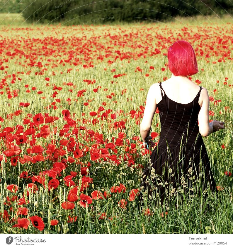Sie.liess.mich.das.gesicht.. Feld Sommer heiß Physik Grad Celsius gehen Kleid schwarz rot weiß Strahlung falsch rothaarig Mohnfeld wandern Spaziergang grün gelb