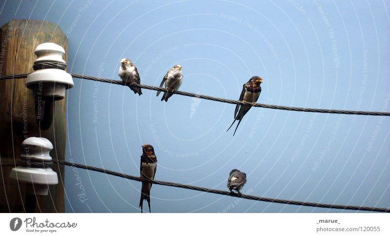 _BETTgestell_ Natur Himmel blau Freude schwarz Wald Erholung Holz grau Zusammensein Vogel fliegen Seil sitzen Elektrizität Aussicht