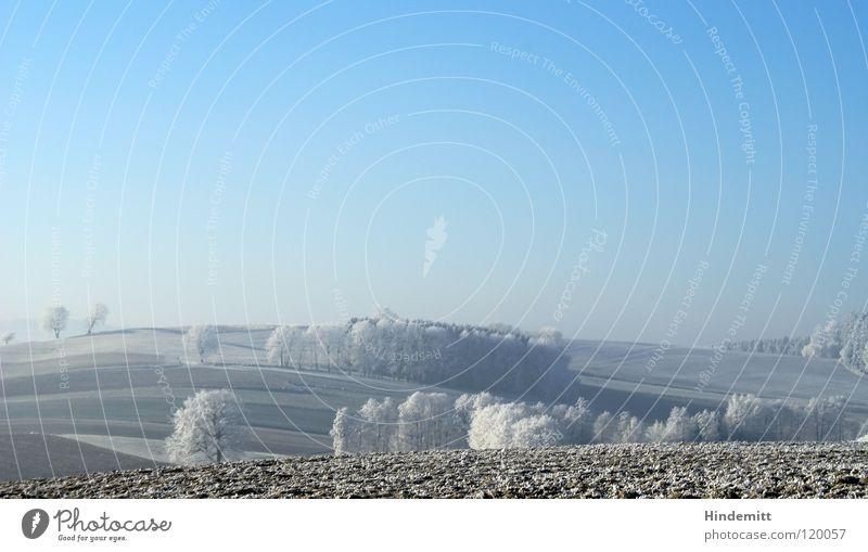 Winter [mal heller] Feld Baum Wiese Nebel schlechtes Wetter braun weiß Farbverlauf Licht ruhig Raureif kalt Eis Klarheit Luft Sonne schön gepflügt Hügel Wellen