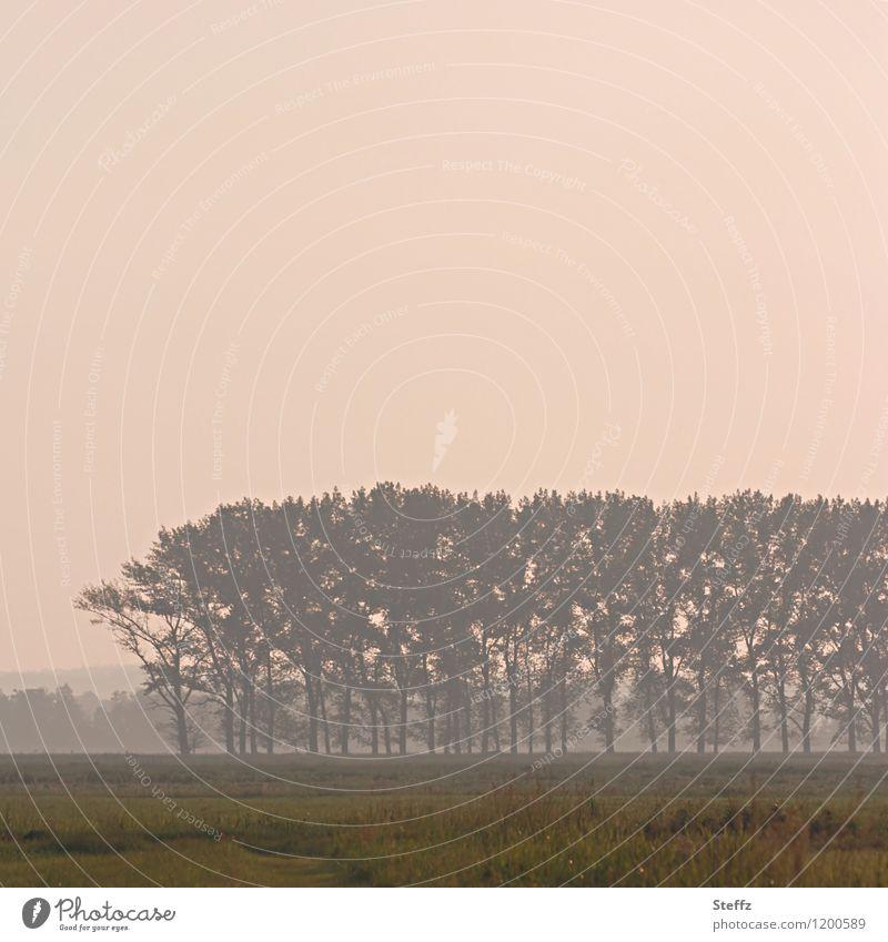 Nachmittagstraum Natur Landschaft Pflanze Himmel Baum Gras Feld Stimmung Romantik ruhig Lichtstimmung Nebel Stimmungsbild verträumt Ton-in-Ton Gedeckte Farben