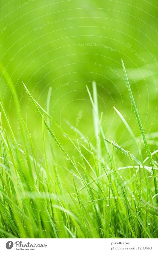 Nasses grünes Gras Natur Pflanze Sommer Frühling Wiese Garten Park Regen frisch Wassertropfen Ausflug nass Schönes Wetter Landwirtschaft