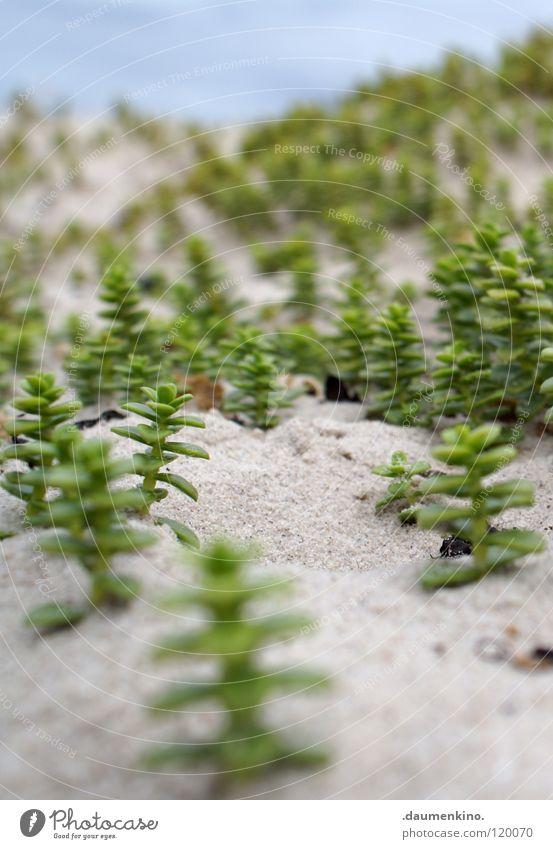 Weltansichten Wasser Baum Meer Pflanze Strand Wald Stein Sand Erde modern Ast Tiefenschärfe