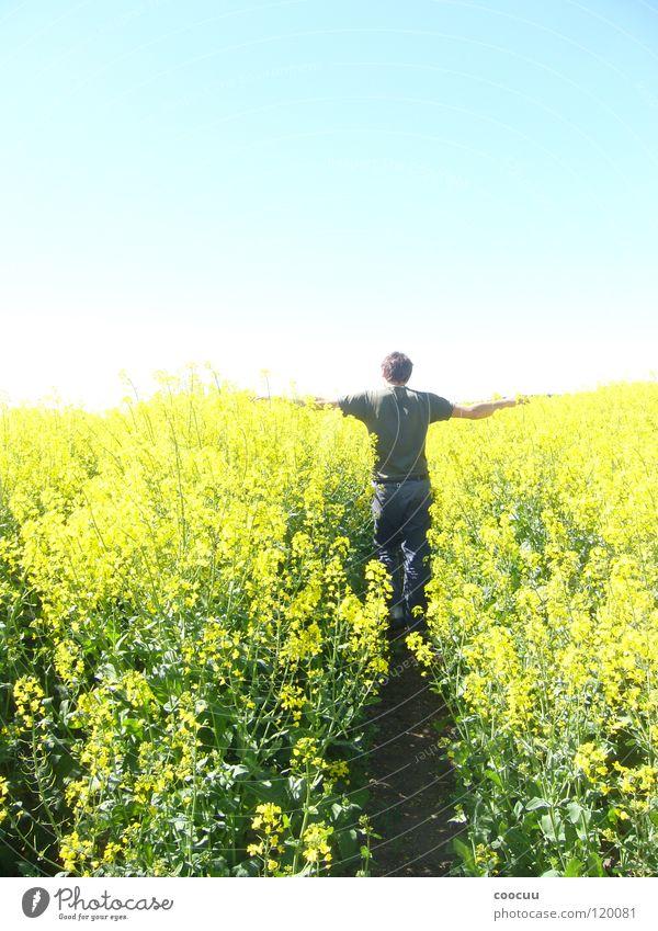 Wachstum Raps Reifezeit Mann gelb Feld Teilung Landwirt einfach Himmel fünfzig Himmel und Erde Sonne Abschied