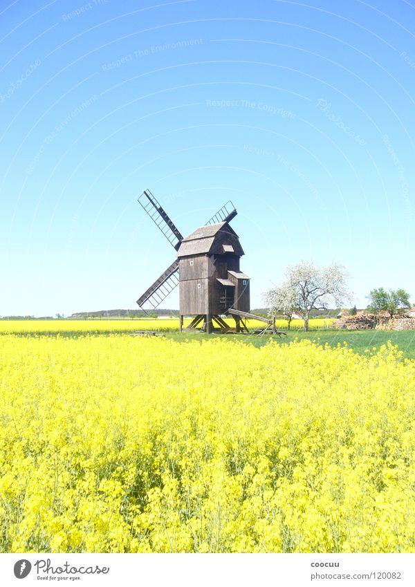 Windmühle Natur Sommer Feld Raps Heimat Mühle