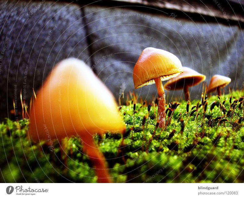 Alien Nation Natur grün Pflanze gelb Leben Herbst Wand Garten Mauer Park klein Umwelt Wachstum Blühend Weltall Sonnenschirm