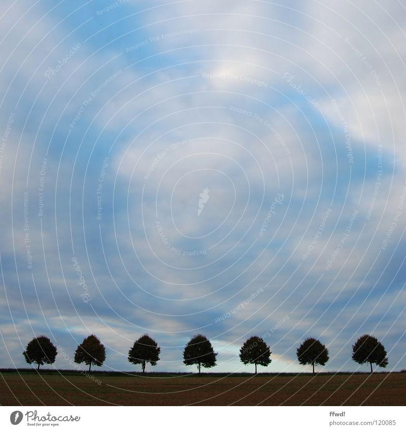 sieben Baum Baumkrone Baumreihe aufgereiht Symmetrie Feld Wolken schlechtes Wetter Dämmerung 7 Himmel Reihe Linie Silhouette geordnet waagrecht Ordnung