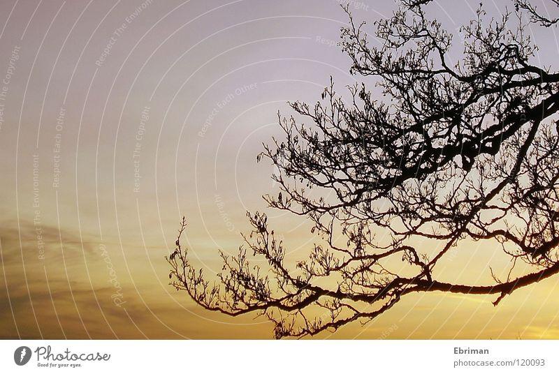 Ausgewachsen Baum Wolken beige weiß schwarz Sonnenuntergang Schleier Stimmung ruhig Sonnenaufgang Pastellton Licht laublos Winter verzweigt Geäst See Himmel