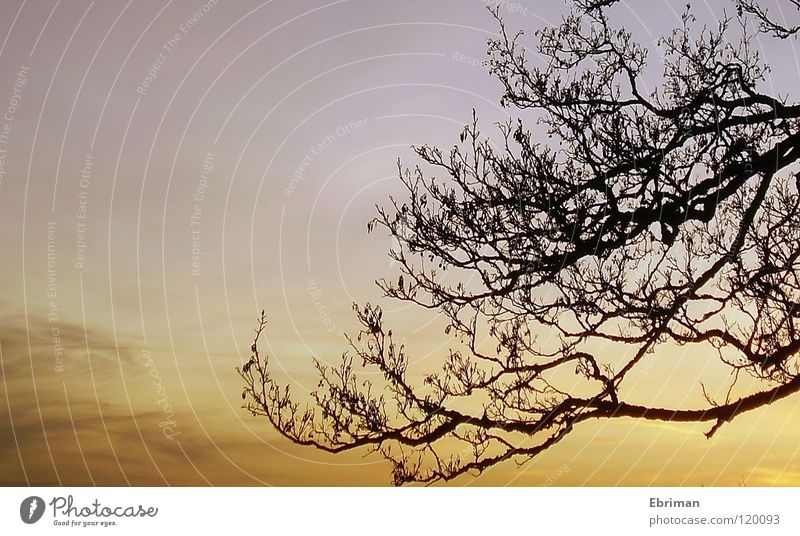 Ausgewachsen Natur Himmel weiß Baum blau Winter ruhig schwarz Wolken See Stimmung orange Küste Ast Zweig Schweden