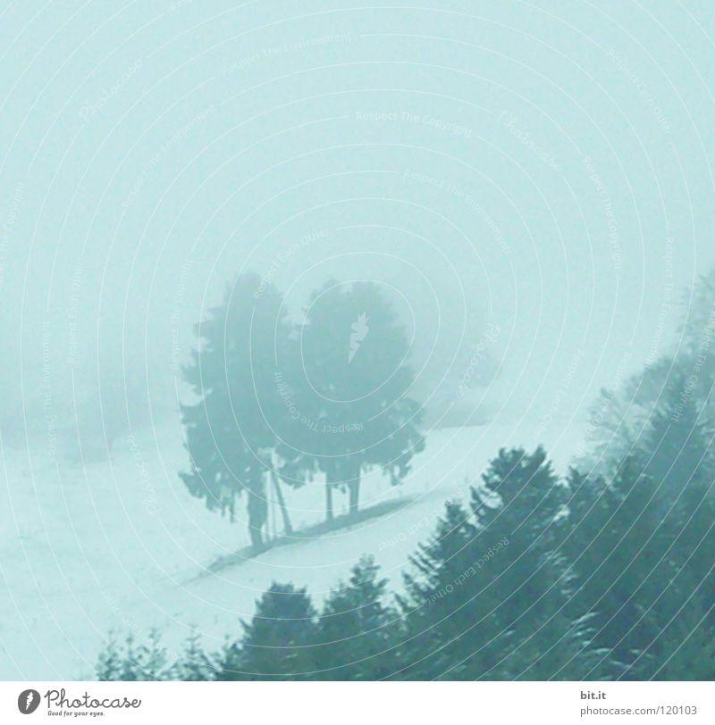 BLACK FOREST BLUES II Tanne Baum Wald Winter kalt Nebel Schwarzwald Baumkrone Tannenzweig Ferne Berghang steil alpin weiß Tiefschnee Freizeit & Hobby