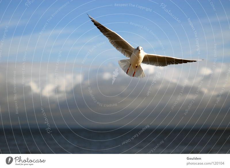Aufschwung Ost Himmel Ferien & Urlaub & Reisen blau weiß Meer Erholung Wolken Freude Strand Wärme Küste Glück Freiheit Vogel Sand träumen