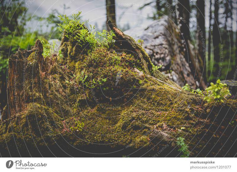 totholz biotop Ferien & Urlaub & Reisen Tourismus Ausflug Abenteuer Ferne Freiheit Expedition Sommerurlaub Berge u. Gebirge Hügel Felsen Alpen hintersee