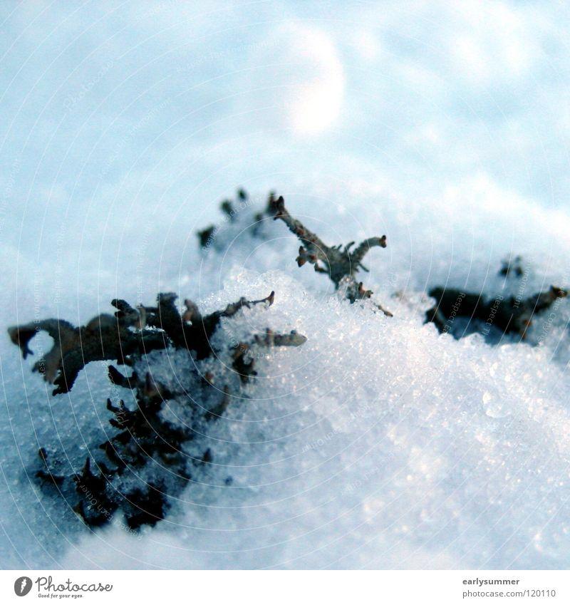 Versteckt im Schnee Natur Pflanze weiß Baum Landschaft Winter Berge u. Gebirge Frühling Holz Wetter Wachstum Ast Seil Niveau Alpen
