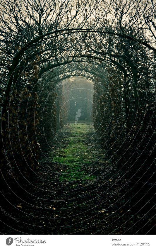 Shining Blatt Sträucher Durchgang Einsamkeit Erholung frieren Angst Gras gruselig Hecke Herbst Herbstlaub Idylle kalt Licht Nebel unklar Park Romantik ruhig