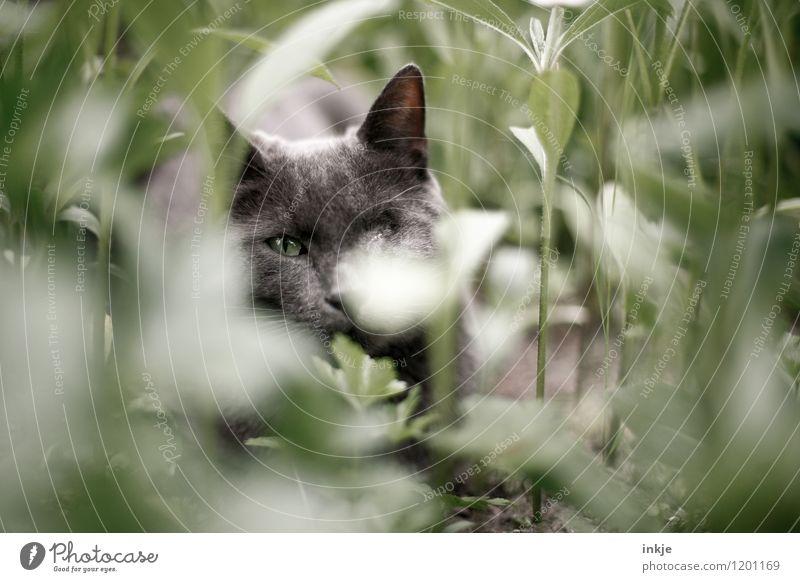 Katzenleben - Tarnung ist alles Natur Pflanze Tier Frühling Sommer Grünpflanze Blumenbeet Stengel Garten Beet Haustier Tiergesicht 1 Erholung liegen Blick