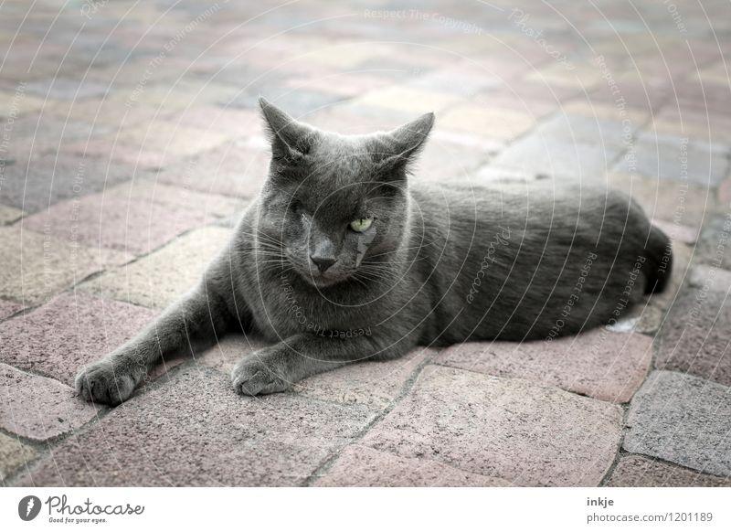 don´t mess with me... Lifestyle Menschenleer Platz Terrasse Steinboden liegen Blick bedrohlich Wut grau Gefühle Stimmung uneinig Verachtung Ärger gereizt