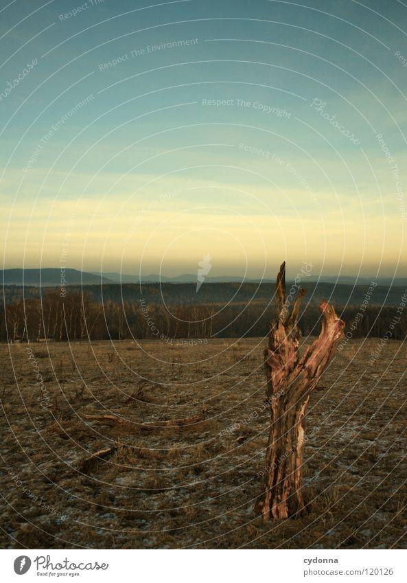 Und im nächsten Leben bin ich ... Himmel Natur alt schön Baum Sonne ruhig Winter Einsamkeit Wald kalt dunkel Tod Gefühle Landschaft