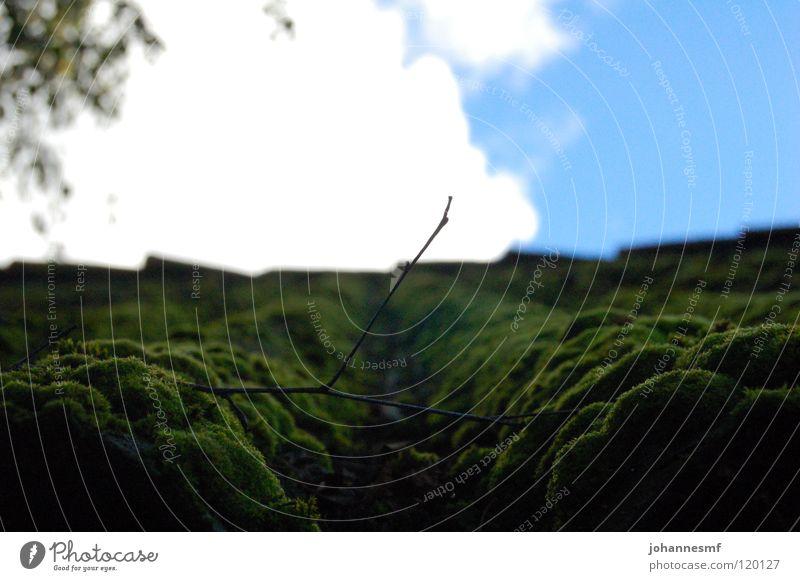 Wellmoos Himmel grün Park Dach Zweig Scheune bewachsen Wellblech