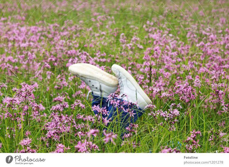 Lila Pause Umwelt Natur Landschaft Pflanze Sommer Schönes Wetter Blume Gras Wiese natürlich violett Schuhe liegen Blumenwiese Farbfoto mehrfarbig Außenaufnahme