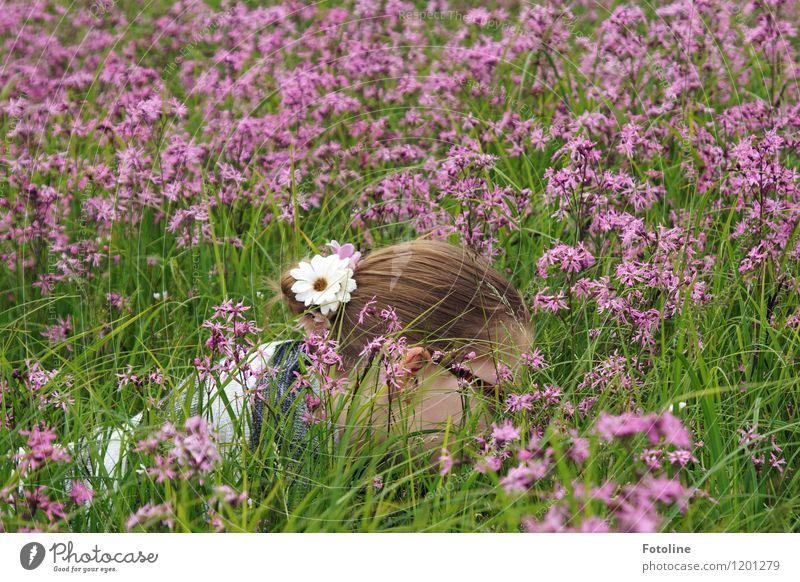 Sommerkind Mensch feminin Kind Mädchen Junge Frau Jugendliche Kindheit Körper Kopf Haare & Frisuren 1 Umwelt Natur Landschaft Pflanze Schönes Wetter Blume Wiese