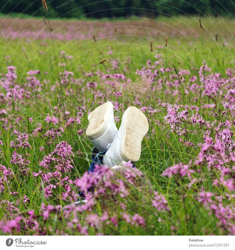 Sommerlaune Umwelt Natur Landschaft Pflanze Schönes Wetter Blume Gras Blüte Wiese frei hell natürlich grün violett weiß Schuhe liegen Erholung Blumenwiese