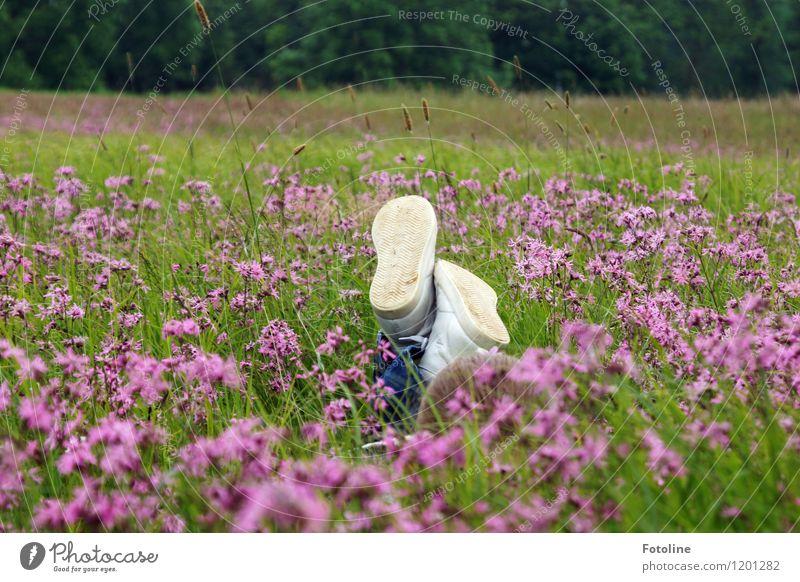 Freiheit Kind zu sein Mensch Kindheit Umwelt Natur Landschaft Pflanze Sommer Schönes Wetter Blume Gras Blüte Wiese frei hell nah natürlich grün violett weiß