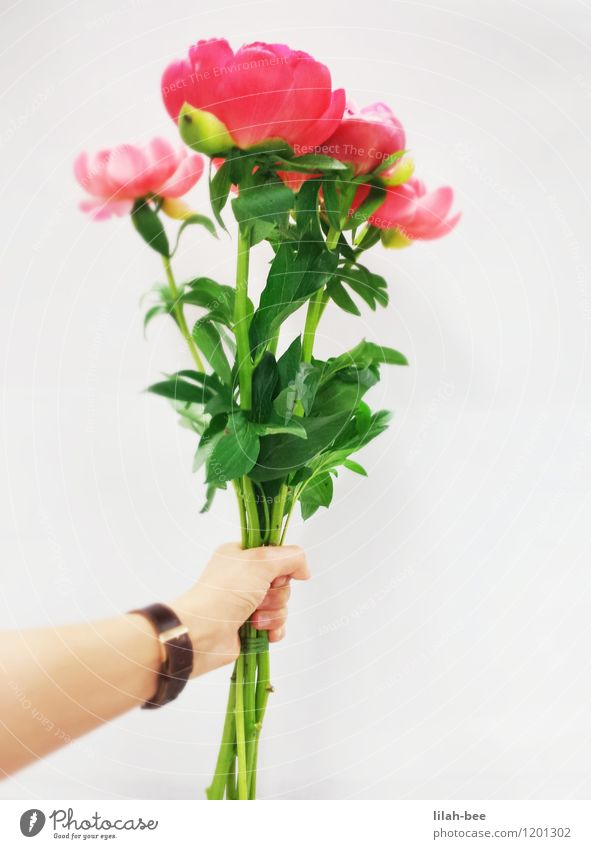 für dich Dekoration & Verzierung Valentinstag Muttertag Geburtstag Mensch Arme Hand Umwelt Natur Pflanze Frühling Sommer Blatt Blüte ästhetisch Freundlichkeit