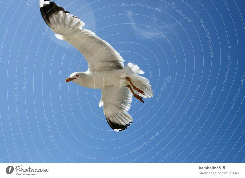 Möve in Venedig Himmel Tier Luft Vogel fliegen