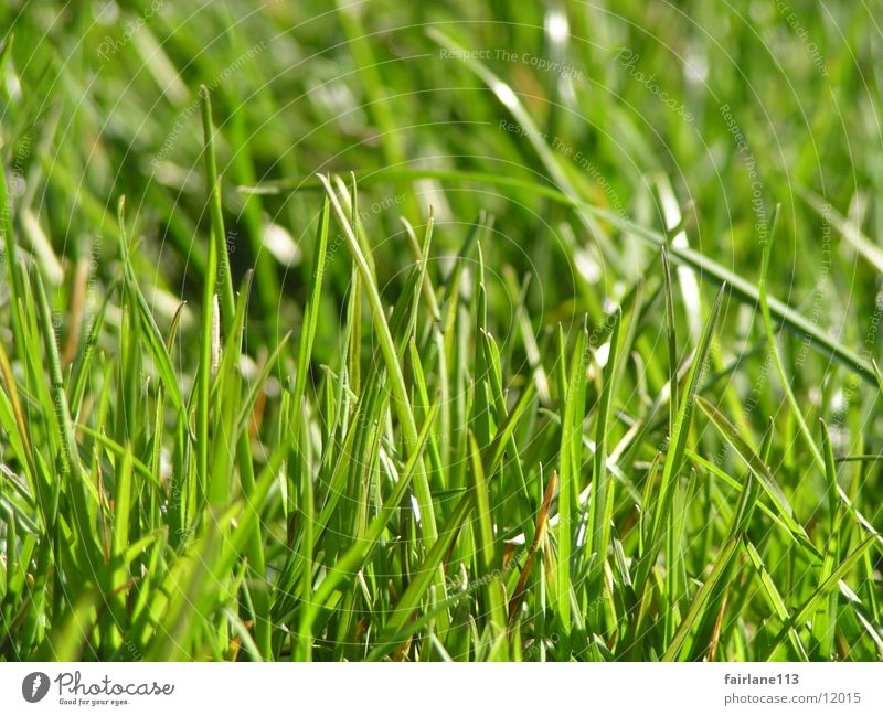 Grasnabe Sonne grün Gras Rasen