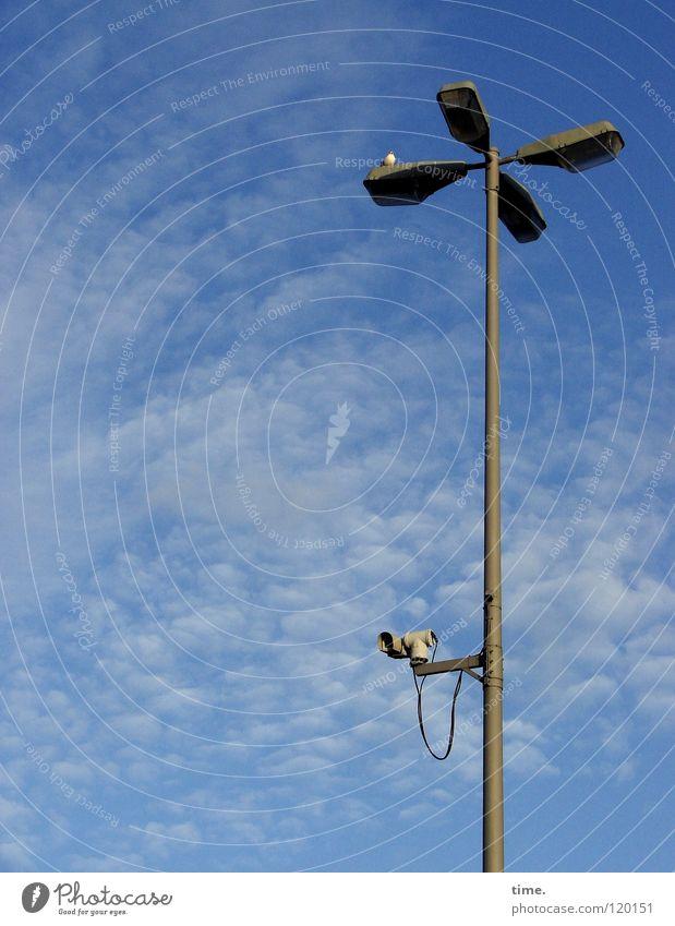 Vorsicht, von oben, Herr Innenminister! Lampe Laterne Straßenbeleuchtung Möwe Vogel Wolken Sicherheit Fotokamera Überwachung Blech Dienstleistungsgewerbe Macht