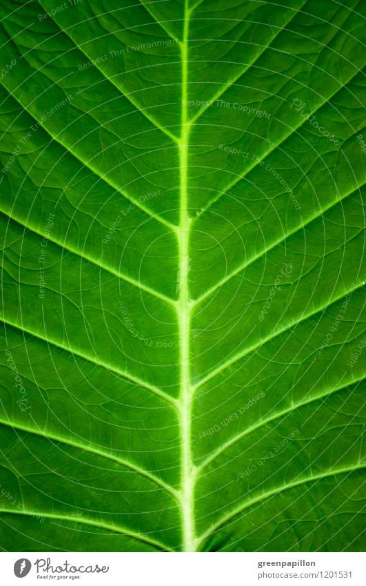 Lebensadern Fortschritt Zukunft Energiewirtschaft Erneuerbare Energie Sonnenenergie Wasserkraftwerk Windkraftanlage Energiekrise Umwelt Natur Pflanze Frühling