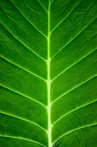 Lebensadern Natur Pflanze grün Farbe Baum Blatt Wald Umwelt Frühling Garten Linie Park Energiewirtschaft frisch Klima