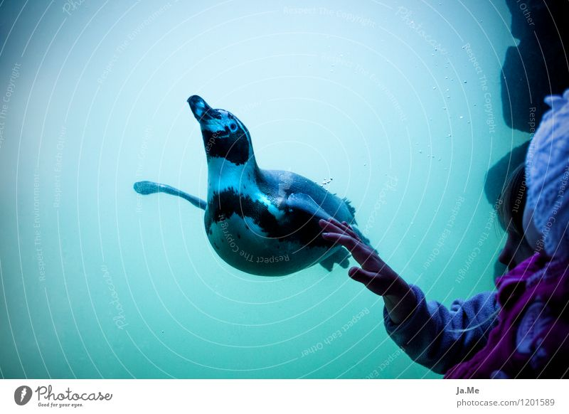 The touch Mensch Kind blau grün Wasser Hand Tier Mädchen Gefühle feminin Glück Familie & Verwandtschaft Vogel Wildtier Kindheit Flügel