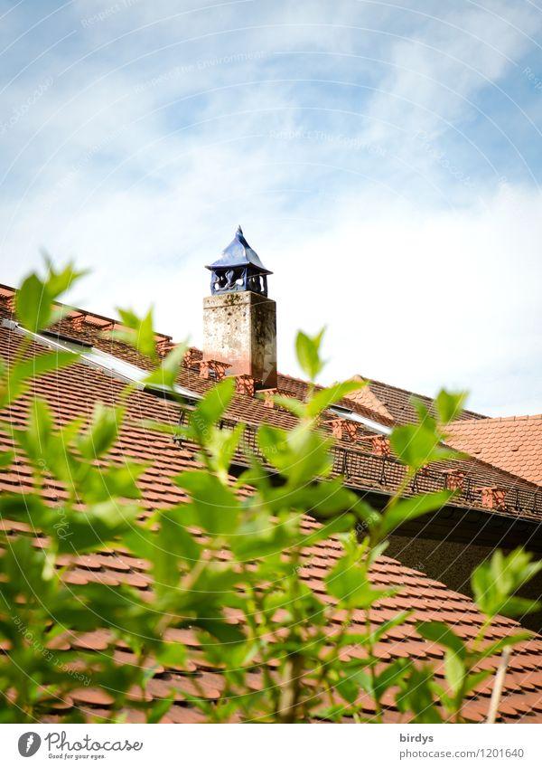 Kamin mit Mütze Himmel Frühling Sommer Schönes Wetter Pflanze Sträucher Dach außergewöhnlich positiv Kreativität Stil ländlich Farbfoto Außenaufnahme