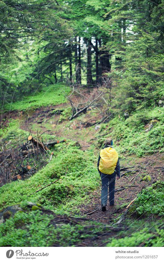 Into the Woods Mensch Frau Ferien & Urlaub & Reisen Jugendliche Pflanze Sommer Junge Frau Baum Landschaft Freude 18-30 Jahre Wald Erwachsene Berge u. Gebirge