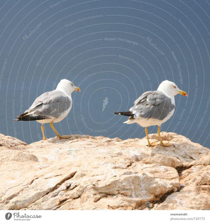 Ich mach nen Abflug! Teil 1 Möwe See Meer stehen Schnabel Langeweile Vogel Seemöwe Stein Felsen Feder Fuß Himmel Berge u. Gebirge Ausschau halten