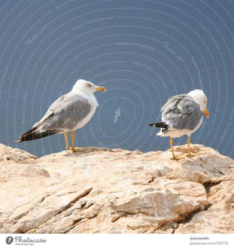 Ich mach nen Abflug! Teil 2 Möwe See Meer stehen Schnabel Langeweile Vogel Seemöwe Stein Felsen Feder Fuß Himmel Berge u. Gebirge Ausschau halten