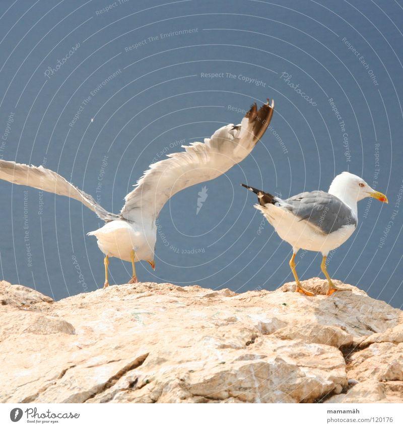 Ich mach nen Abflug! Teil 3 Möwe See Meer stehen Schnabel Langeweile Abheben Klippe Beginn fliegen Vogel Seemöwe Stein Felsen Feder Fuß Himmel Berge u. Gebirge