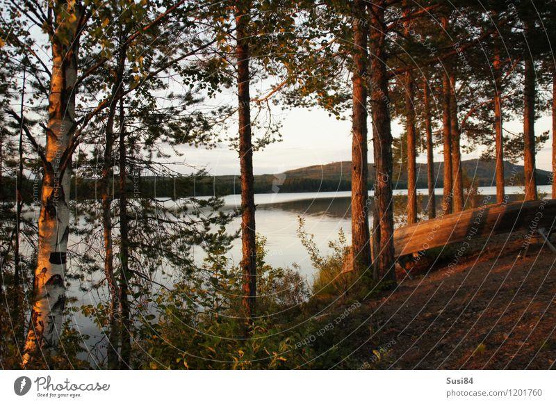 Schwedische Idylle Natur Pflanze Sonnenaufgang Sonnenuntergang Sommer Baum Sträucher Kiefer Birke Wald Küste Seeufer Ruderboot Erholung Wachstum ästhetisch