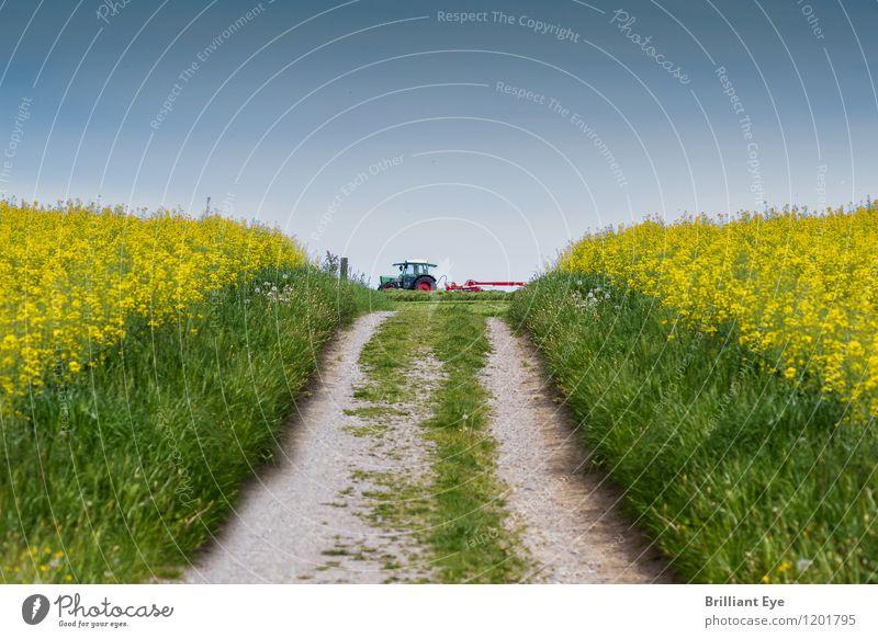 Gehweg bei Rapsfeldern Natur Pflanze Landschaft Ferne Umwelt gelb Frühling Wege & Pfade Energiewirtschaft Feld Schönes Wetter Landwirtschaft lang Maschine