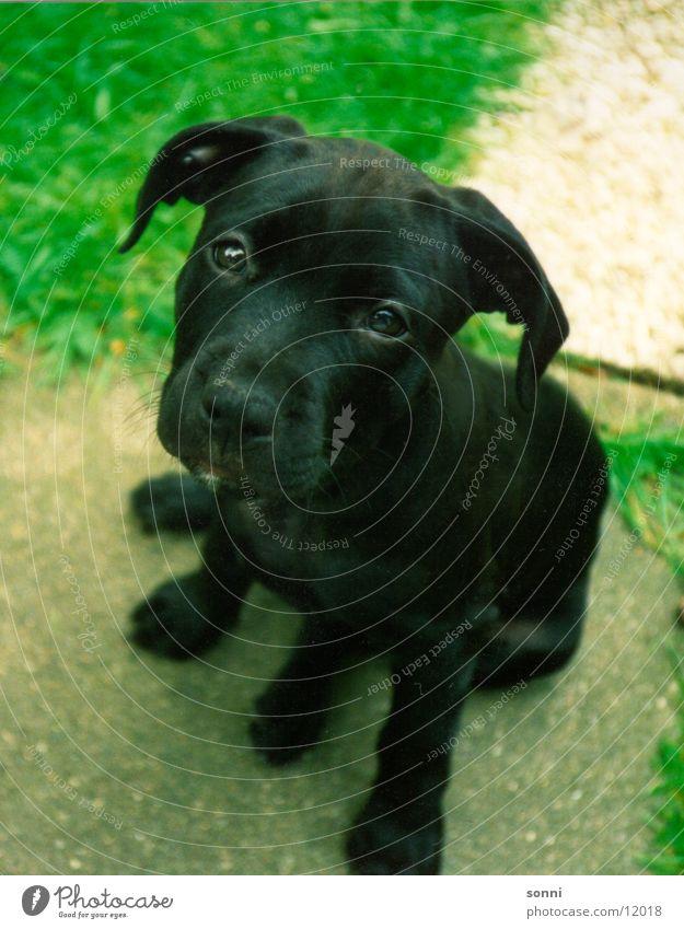 Bestie Hund ruhig Tierjunges klein sitzen niedlich süß kuschlig Welpe gehorsam Roman Momo