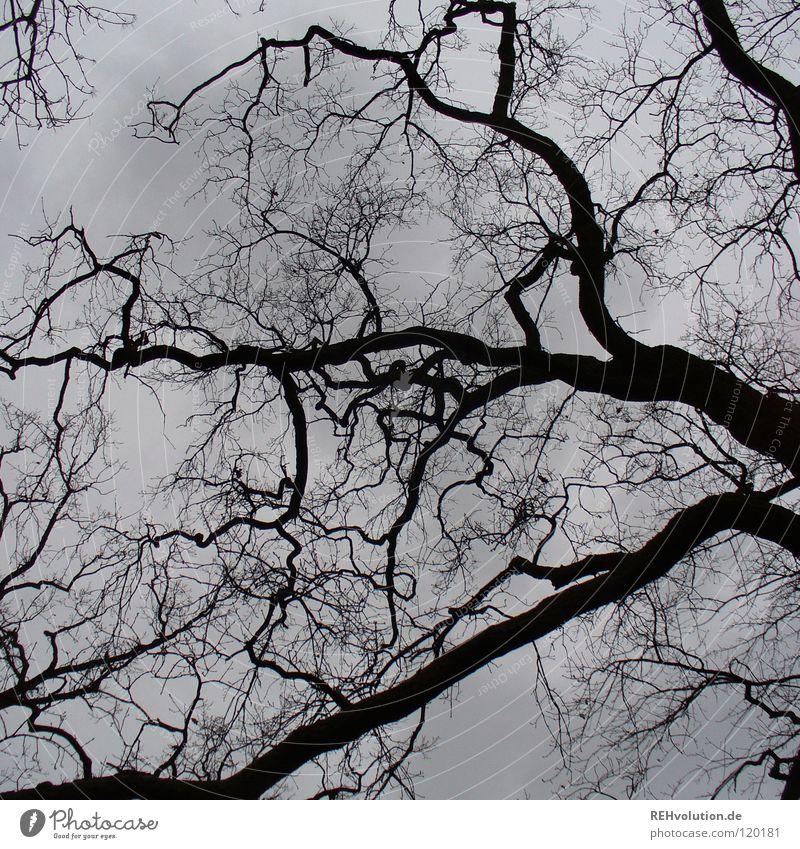 abwesenheit von blauem himmel Natur Himmel Baum Winter Wolken dunkel grau Traurigkeit Regen Stimmung Wetter Kraft Ast stark Gefäße November
