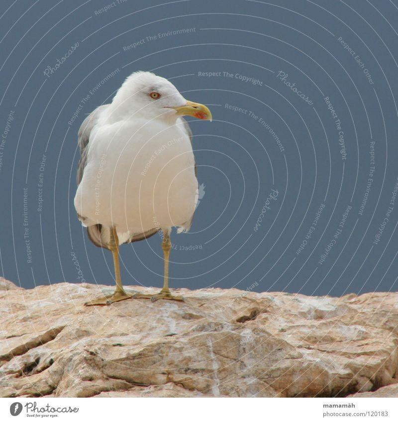 Sitzengelassen Möwe Meer See Schnabel Feder Einsamkeit Vogel Seemöwe Flügel Stein Felsen Fuß Berge u. Gebirge Auge