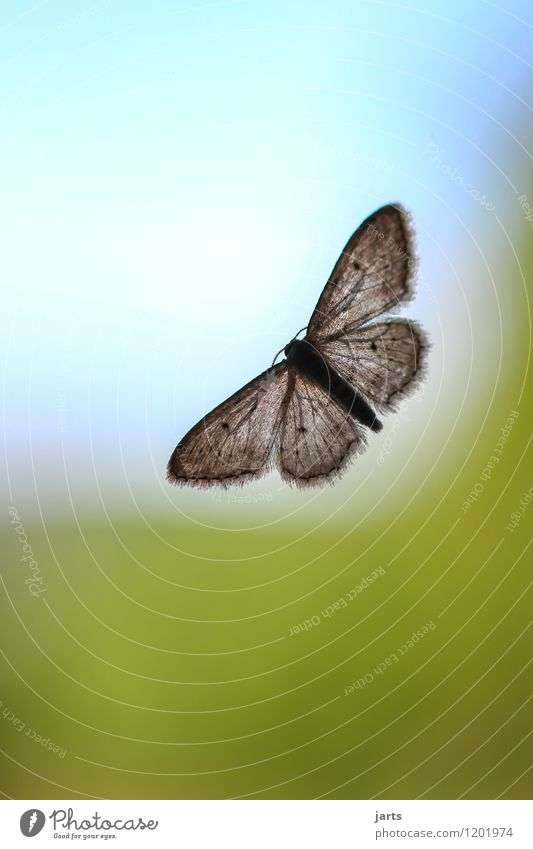 (grenzen)los Himmel Natur Tier Fenster natürlich fliegen Wildtier sitzen Flügel Hoffnung Fernweh Wolkenloser Himmel Schmetterling Glasscheibe Motte