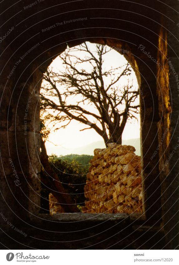 Fenster Stimmung Ruine Mallorca Licht Aussicht Ferne Baum Tor Schatten