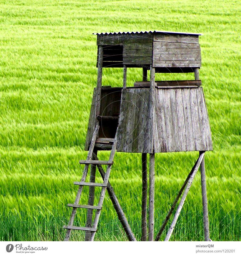 the hide. Hochsitz Jäger Feld grün Ferne Einsamkeit ruhig Spuren dunkel Vordergrund Hintergrundbild Zutaten unreif Deutschland Heimat Gelassenheit