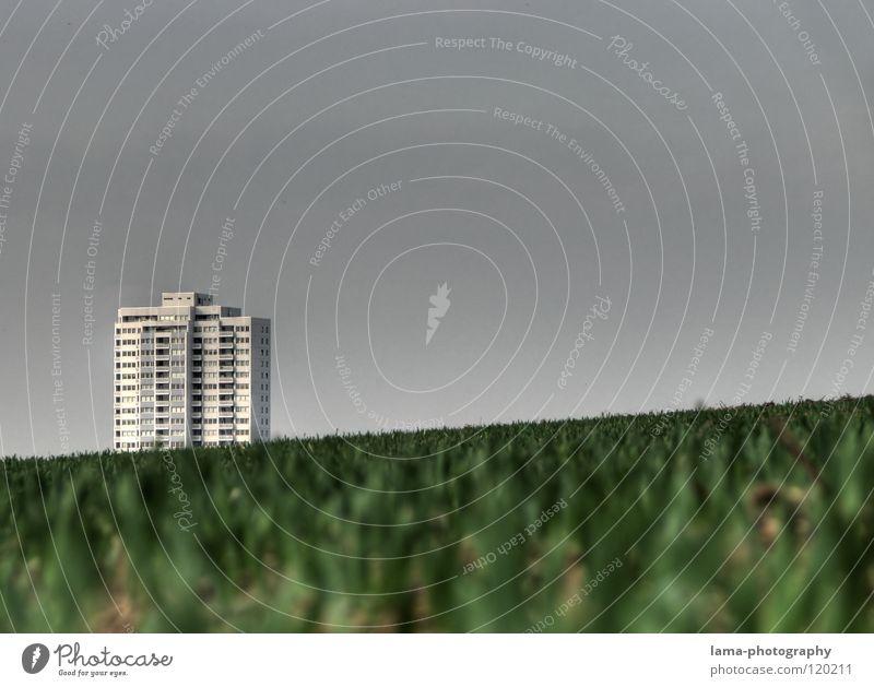 Rutschgefahr Gras grün Wachstum gedeihen Feld Landwirtschaft Bauernhof Wiese ländlich schlechtes Wetter grau Symmetrie graphisch Ferne Halm Hochhaus Haus