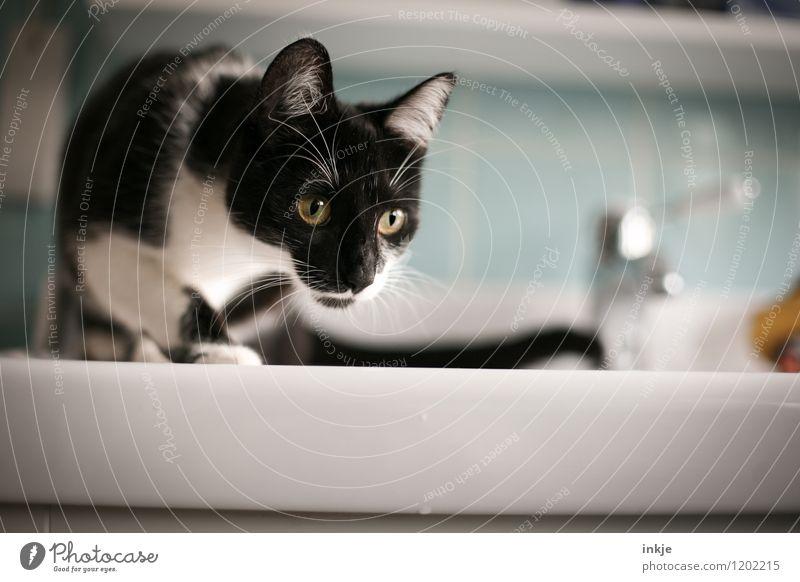 Katzenleben - anschleichen Lifestyle Häusliches Leben Bad Haustier Tiergesicht 1 Tierjunges beobachten Neugier niedlich Gefühle Interesse Farbfoto Innenaufnahme
