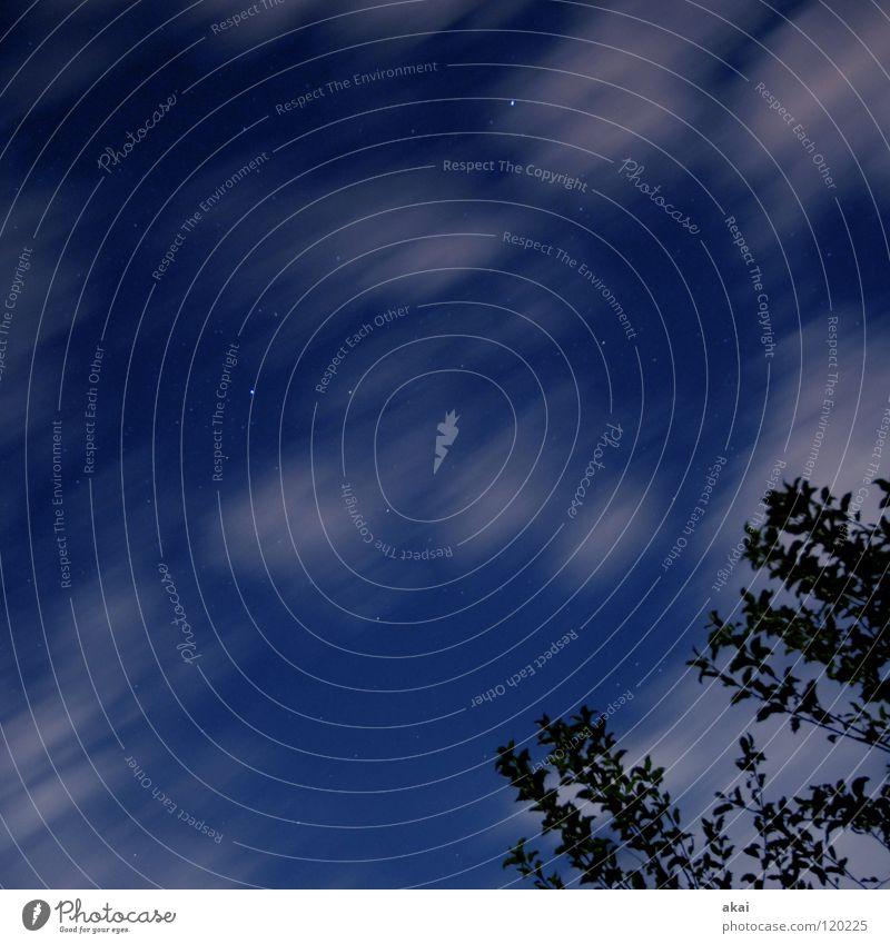Sterne über Freiburg Himmel himmelblau Geometrie Laubbaum Perspektive Laubwald Waldwiese Paradies Nadelwald Waldlichtung ruhig grün Pflanze Baum Blatt Wachstum