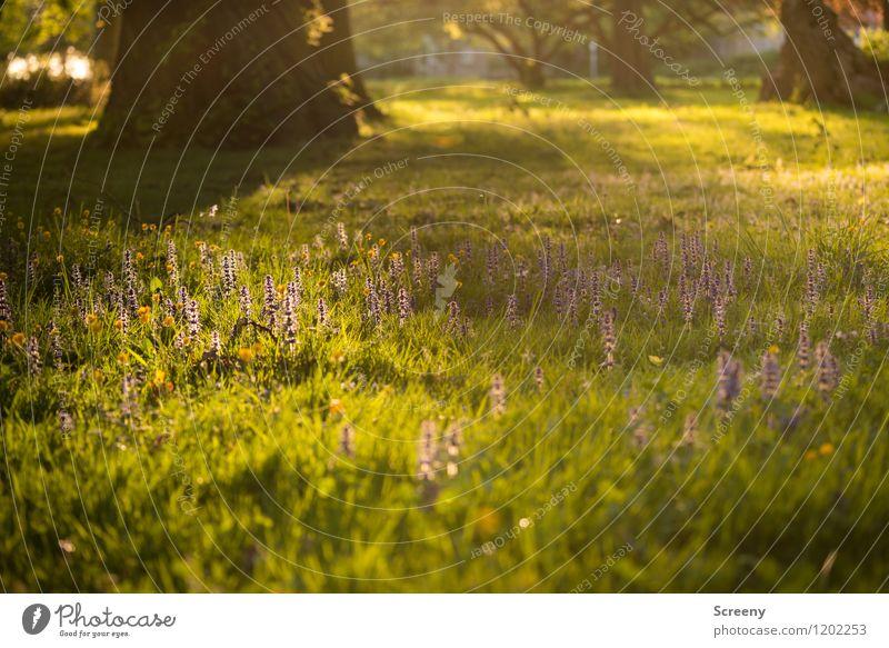 Die letzten Strahlen... | UT Köln Natur Landschaft Pflanze Sonnenaufgang Sonnenuntergang Sonnenlicht Frühling Sommer Schönes Wetter Baum Blume Gras Sträucher